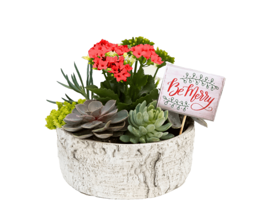 Succulent Bowl - red